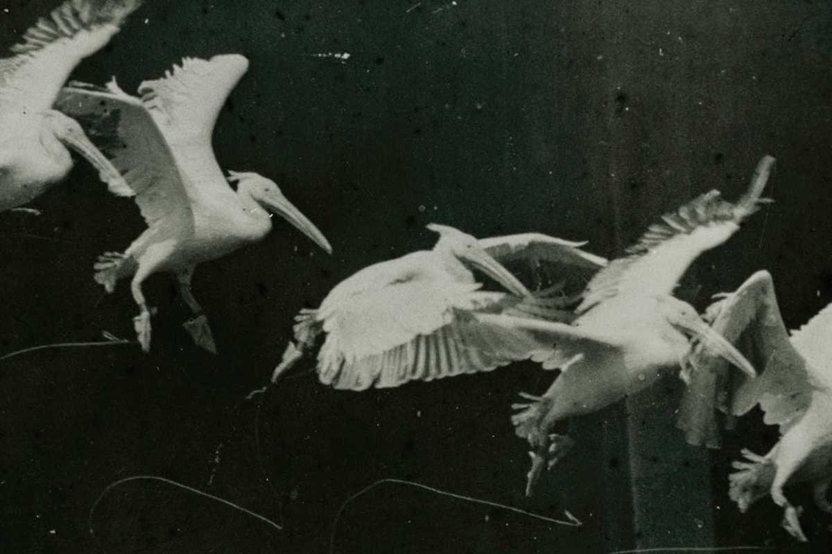 etienne jules marey birds