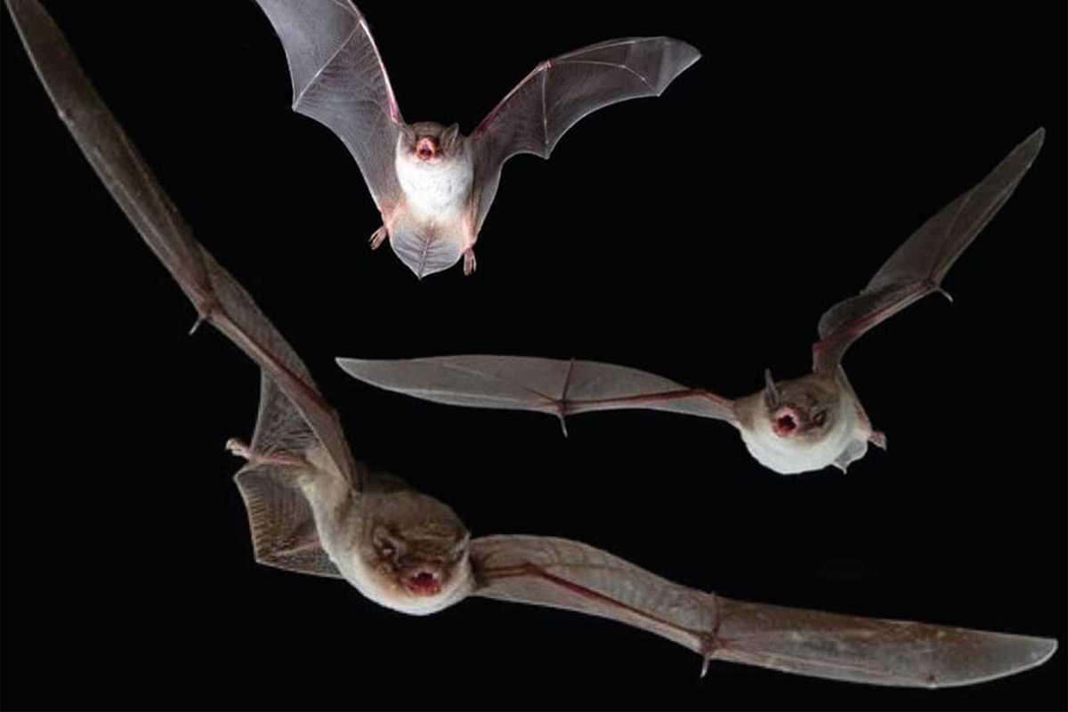 insert saturdays bats