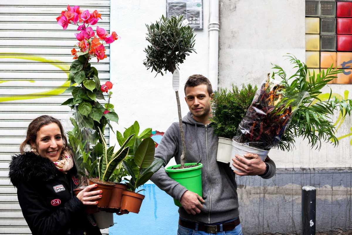 plantas para todos