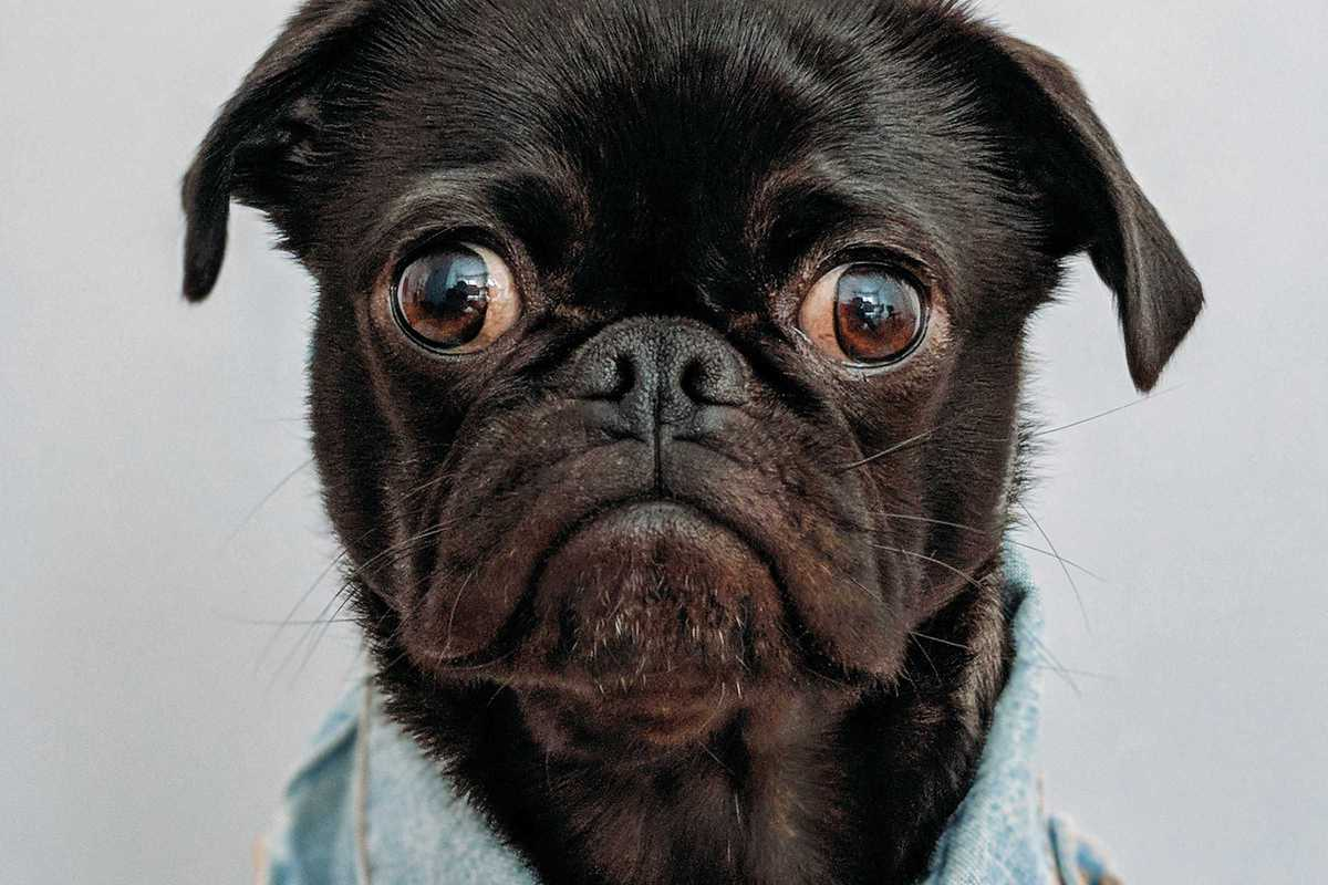 worried dog charles